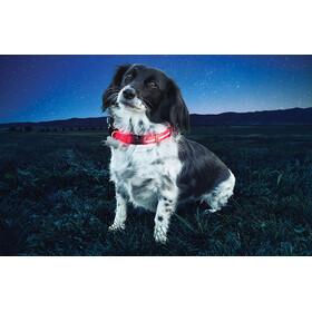 Nite Ize Nite Dawg LED Dog Collar Small Red